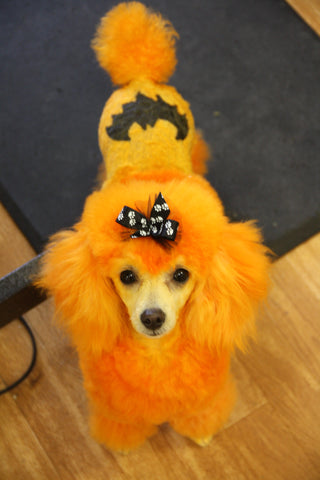 Halloween Dog Contest Warren London