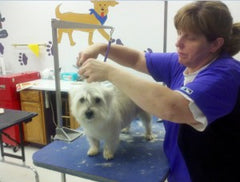 Leicester Ma Dog Grooming