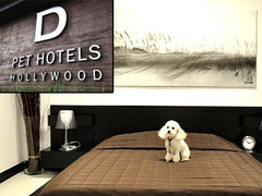 d pet hotels logo