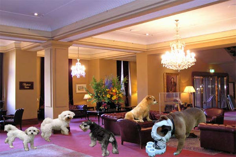 Dogs at Hotels