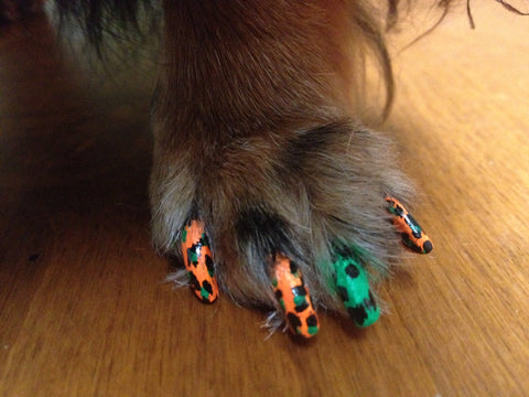 Halloween Dog Nail Polish