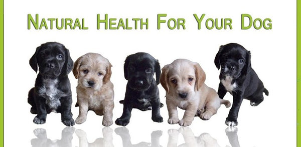 Natural Dog Health