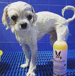 Natural Dog Shampoo Made in the USA Warren London