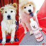 Magic White Brightening Dog Shampoo - Cherry Scented - 17oz warren london dog products