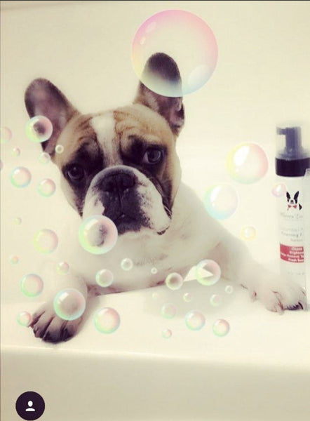 Cucumber Melon Foaming Facial For Dogs