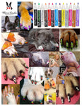 Pawdicure Polish Pens - Choose From 13 Colors! - Dog Nail Polish - Warren London  - 2