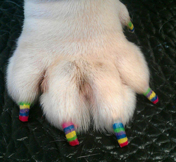 Pawdicure Polish Pens - Choose From 13 Colors! - Dog Nail Polish - Warren London  - 5