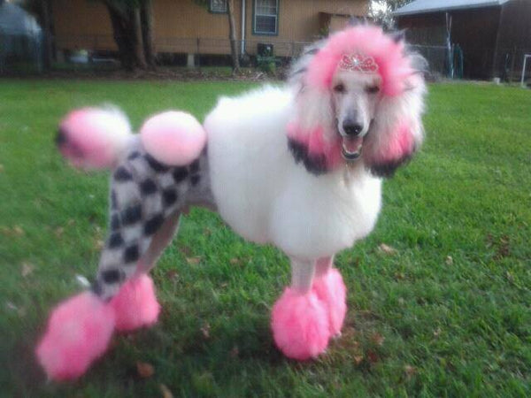 Critter Color - Temporary Dog Fur Coloring - Warren London  - 3