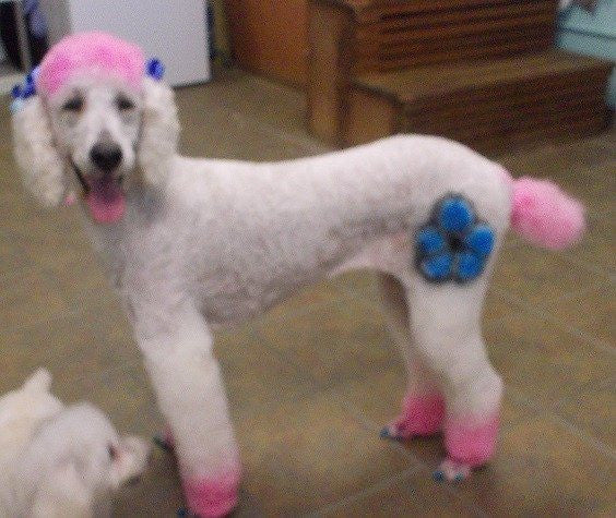 Critter Color - Temporary Dog Fur Coloring - Warren London  - 5