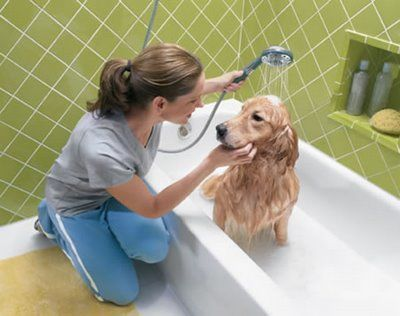 Giving your dog a bath
