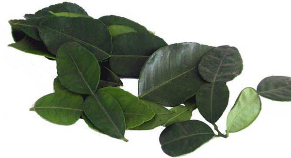 kaffir lime leaves fresh