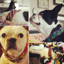 Load image into Gallery viewer, Custom Dog Collar