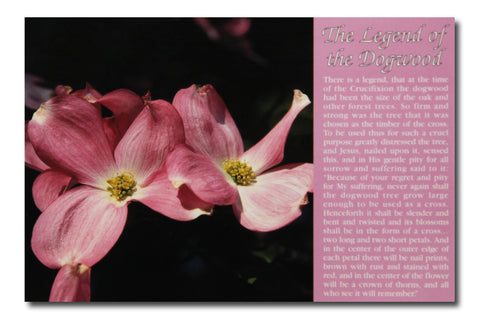The Legend of Dogwood Postcard