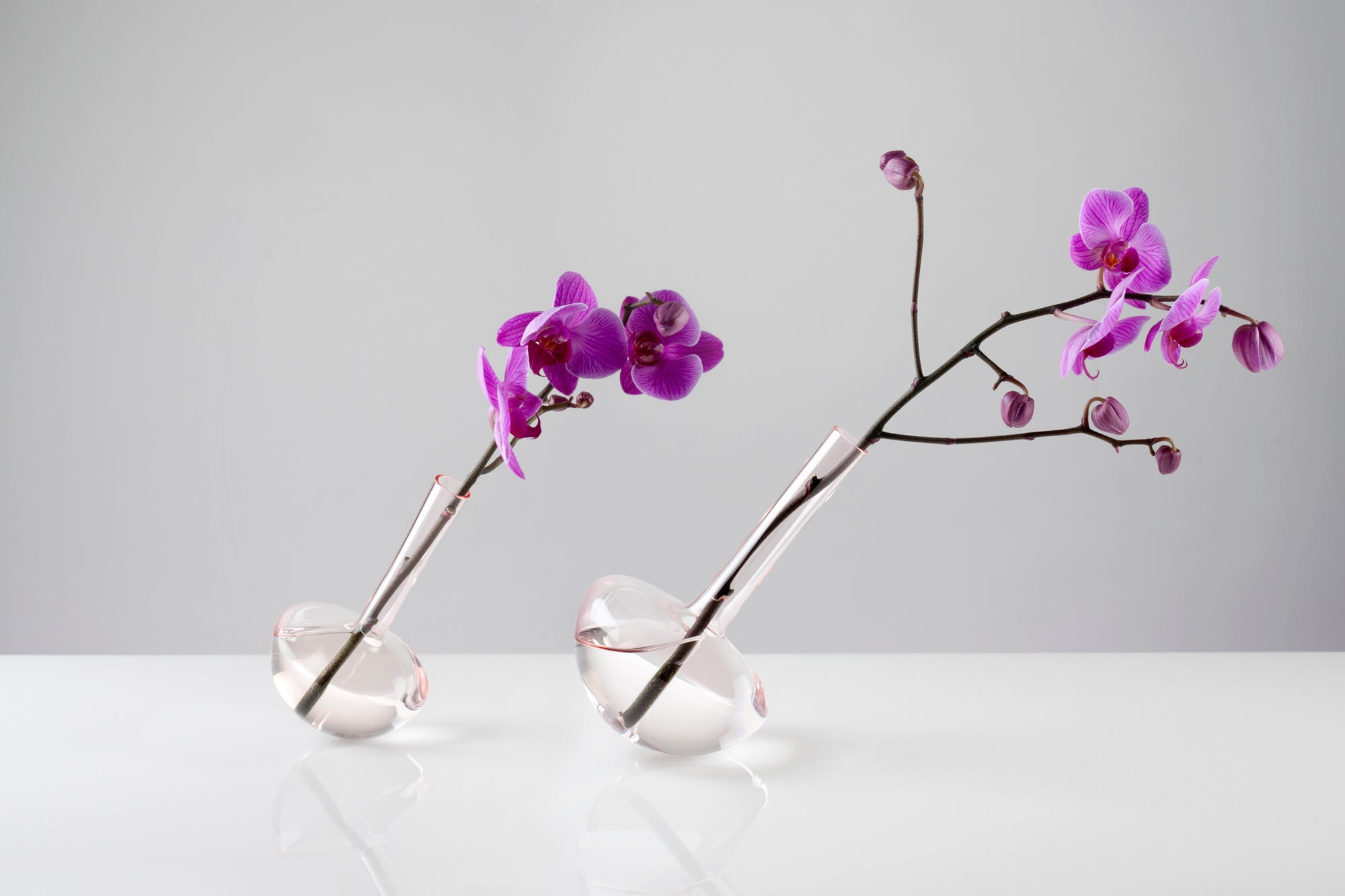 GAUGE vase (Stems, with Single Stem) - Photograph by John R Ward