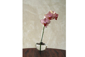 GAUGE Borosilicate vase (Single Stem)