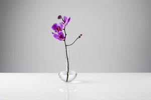 GAUGE vase (Single stem, Clear) - Photograph by John R Ward