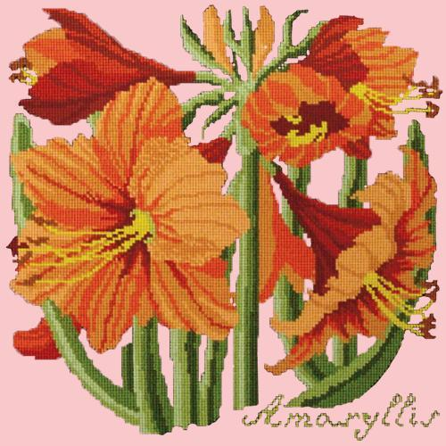 Amaryllis Needlepoint Kit Elizabeth Bradley Design Pale Rose