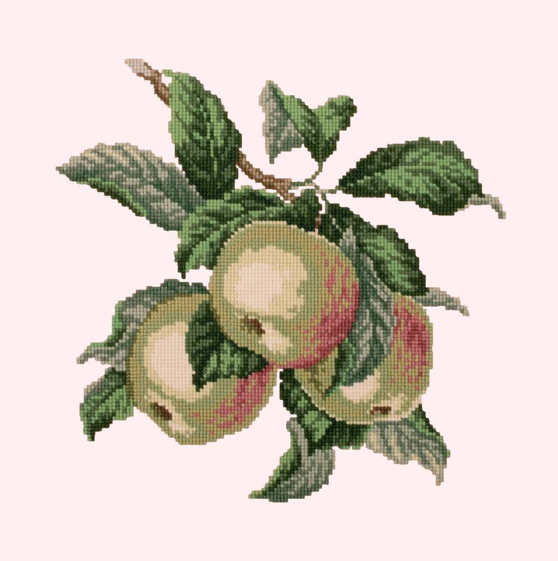 Apples Needlepoint Kit Elizabeth Bradley Design Cream