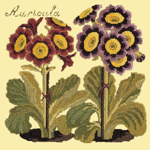 Auricula Needlepoint Kit Elizabeth Bradley Design Butter Yellow
