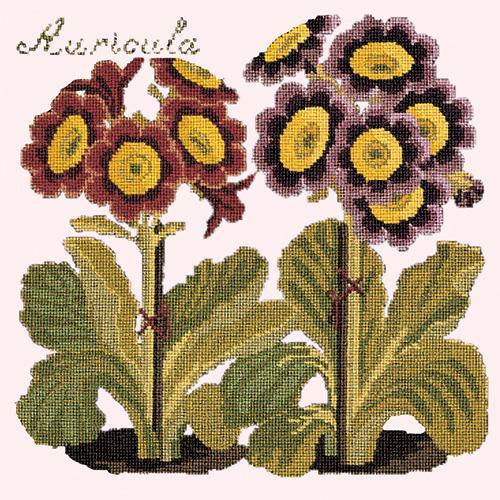 Auricula Needlepoint Kit Elizabeth Bradley Design Cream