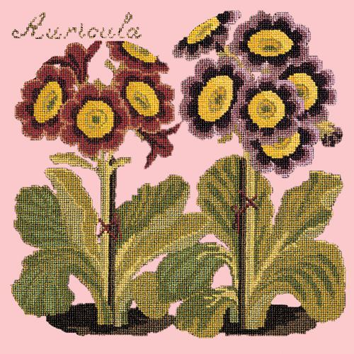 Auricula Needlepoint Kit Elizabeth Bradley Design Pale Rose