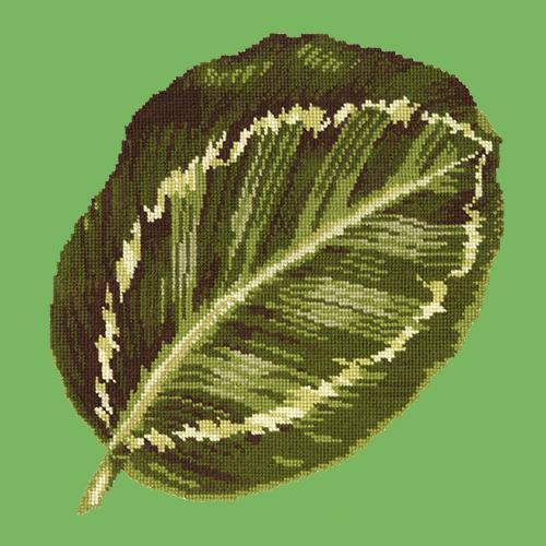 Calathea Leaf Needlepoint Kit Elizabeth Bradley Design Grass Green