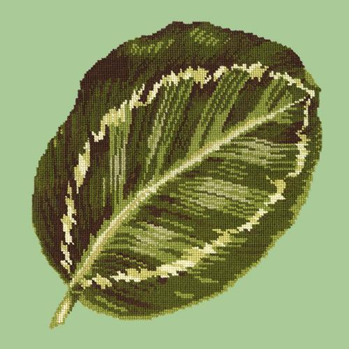 Calathea Leaf Needlepoint Kit Elizabeth Bradley Design Pale Green