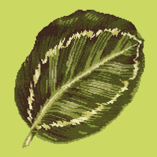 Calathea Leaf Needlepoint Kit Elizabeth Bradley Design Pale Lime