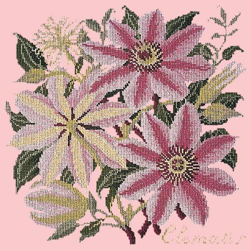 Clematis Needlepoint Kit Elizabeth Bradley Design Pale Rose