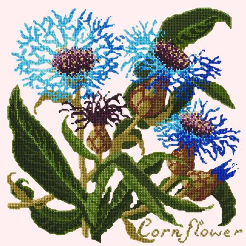 Cornflower Needlepoint Kit Elizabeth Bradley Design Cream