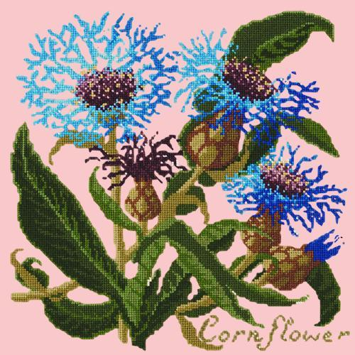 Cornflower Needlepoint Kit Elizabeth Bradley Design Pale Rose