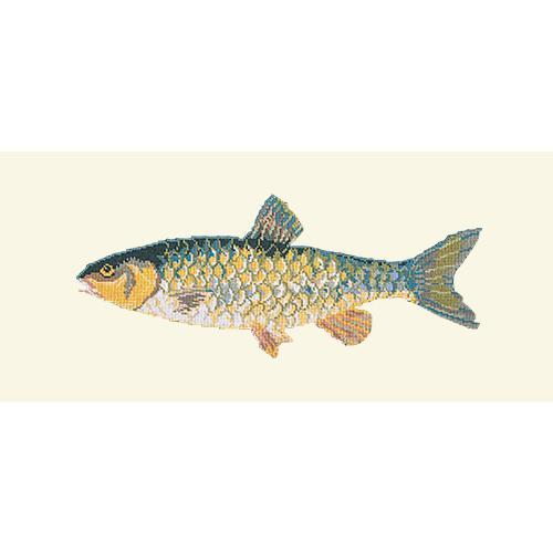 Freshwater Chub Needlepoint Kit Elizabeth Bradley Design Winter White