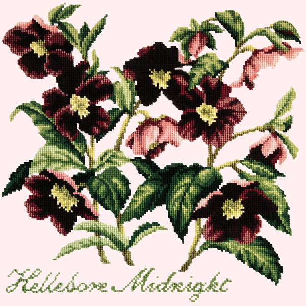 Hellebore Midnight Needlepoint Kit Elizabeth Bradley Design Cream