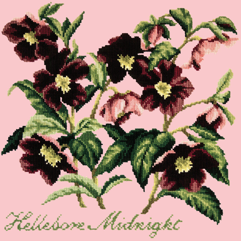 Hellebore Midnight Needlepoint Kit Elizabeth Bradley Design Pale Rose