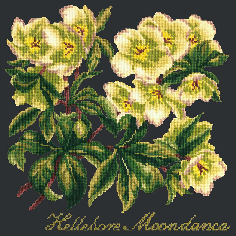 Hellebore Moondance Needlepoint Kit Elizabeth Bradley Design Black
