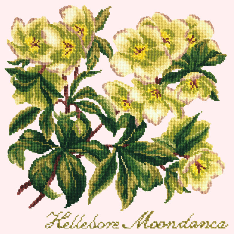 Hellebore Moondance Needlepoint Kit Elizabeth Bradley Design Cream
