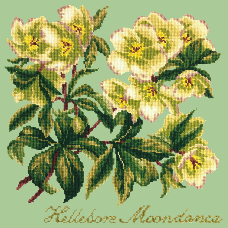 Hellebore Moondance Needlepoint Kit Elizabeth Bradley Design Pale Green