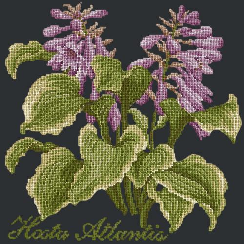 Hosta Atlantis Needlepoint Kit Elizabeth Bradley Design Black