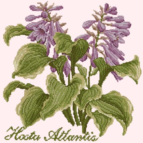 Hosta Atlantis Needlepoint Kit Elizabeth Bradley Design Cream