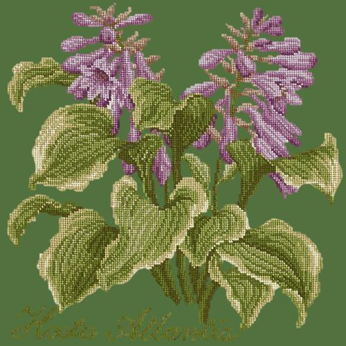 Hosta Atlantis Needlepoint Kit Elizabeth Bradley Design Dark Green
