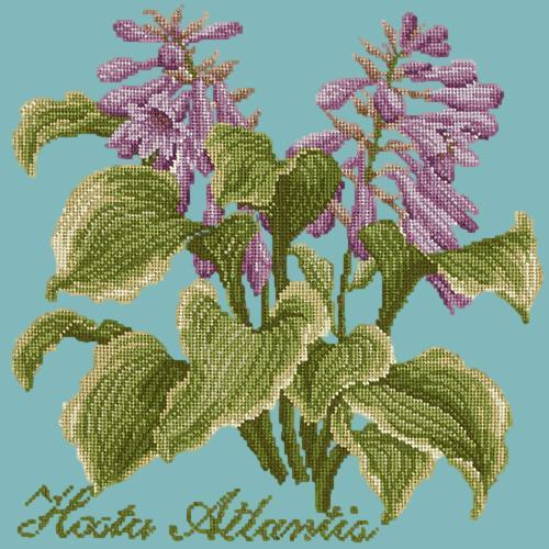 Hosta Atlantis Needlepoint Kit Elizabeth Bradley Design Duck Egg Blue
