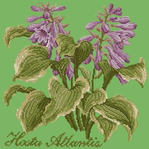 Hosta Atlantis Needlepoint Kit Elizabeth Bradley Design Grass Green