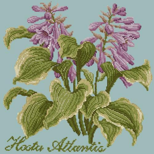 Hosta Atlantis Needlepoint Kit Elizabeth Bradley Design Pale Blue