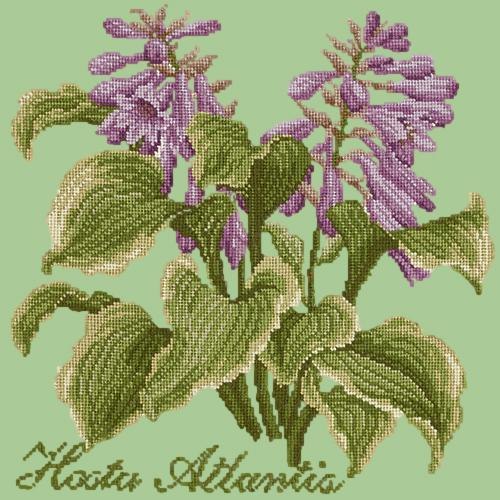 Hosta Atlantis Needlepoint Kit Elizabeth Bradley Design Pale Green