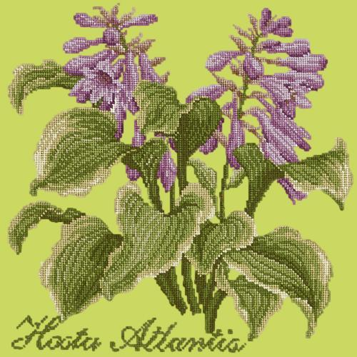 Hosta Atlantis Needlepoint Kit Elizabeth Bradley Design Pale Lime