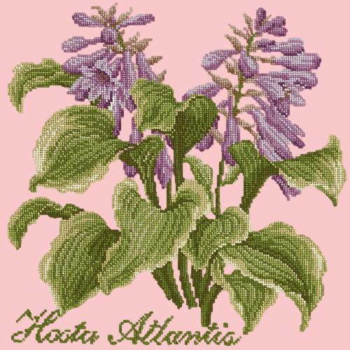 Hosta Atlantis Needlepoint Kit Elizabeth Bradley Design Pale Rose