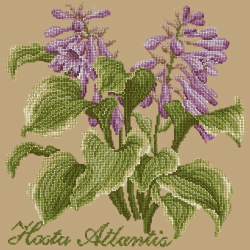 Hosta Atlantis Needlepoint Kit Elizabeth Bradley Design Sand