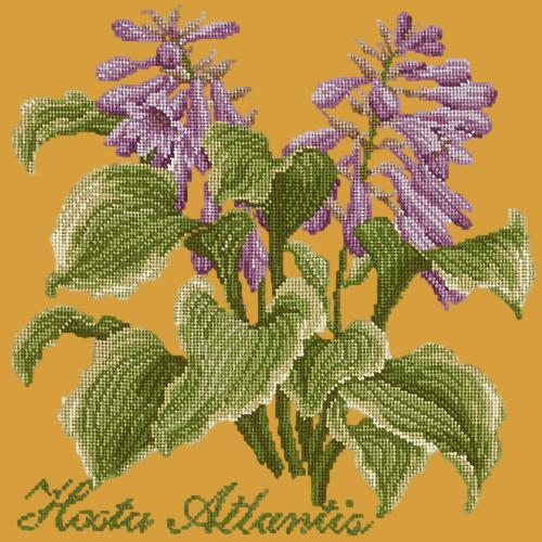 Hosta Atlantis Needlepoint Kit Elizabeth Bradley Design Yellow