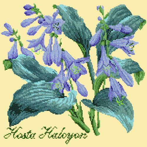 Hosta Halcyon Needlepoint Kit Elizabeth Bradley Design Butter Yellow