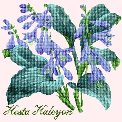 Hosta Halcyon Needlepoint Kit Elizabeth Bradley Design Cream